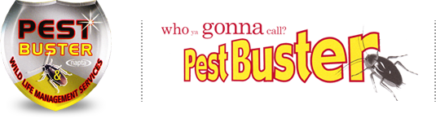 Pest Control in Wilmslow, Knutsford, Northwich, Macclesfield | Pest Buster